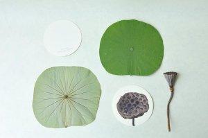 画像3: オリジナルメッセージカード 「Lotus」【5枚セット】