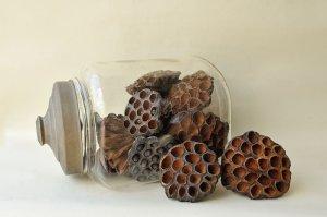 画像3: Dry plants for decor デコール用乾燥花托(蓮)【10個セット・オリジナルペーパーバッグ付】