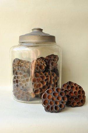 画像2: Dry plants for decor デコール用乾燥花托(蓮)