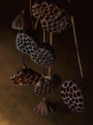 画像1: Dry plants for decor デコール用乾燥花托(蓮)【10個セット・オリジナルペーパーバッグ付】