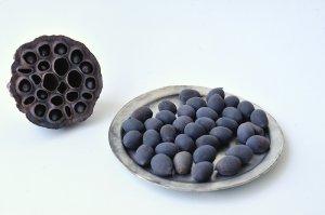 画像1: Dry plants for decor デコール用乾燥種子(蓮)100g