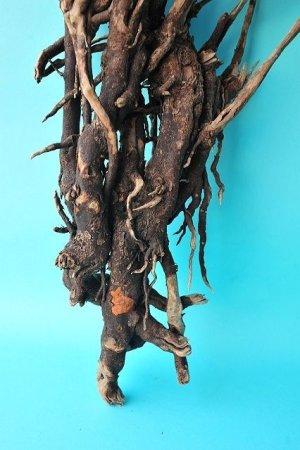 画像2: 流木根(中型)