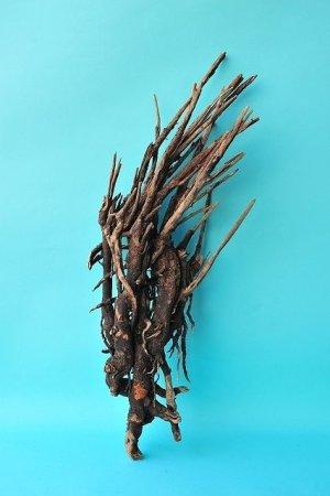 画像1: 流木根(中型)