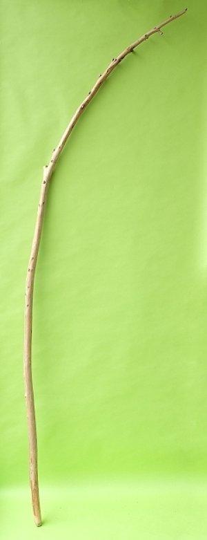 画像1: 棒流木・長尺
