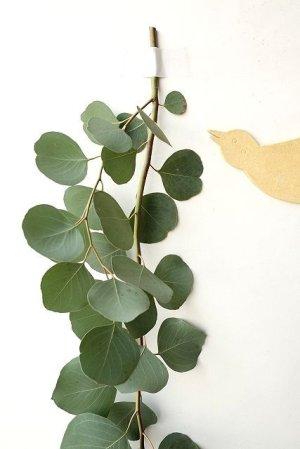 画像2: Dry plants for decor ユーカリ生切り枝(ポポラス)タイプ1000mm