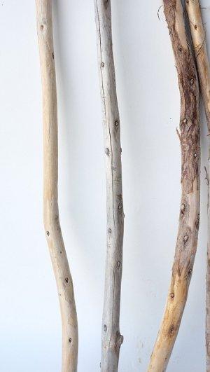 画像5: 棒流木セット(カット流木)