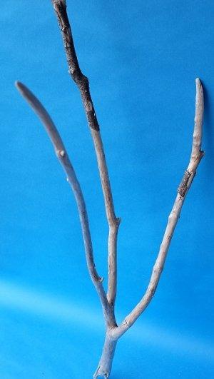 画像4: 枝流木