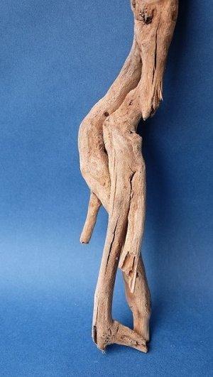 画像2: ミニ流木根セット