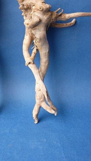 画像5: ミニ流木根セット
