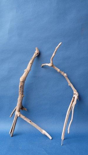 画像1: 流木根セット