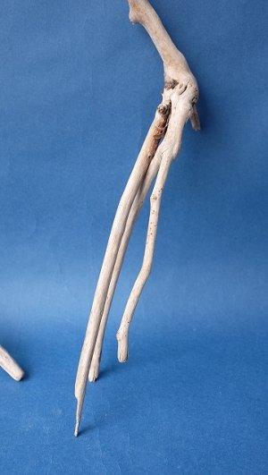 画像5: 流木根セット