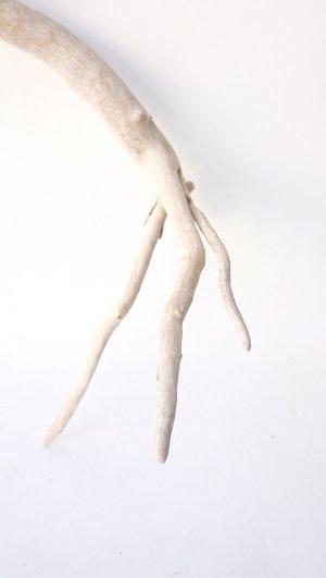画像2: 流木根