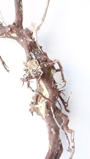 画像3: 流木根