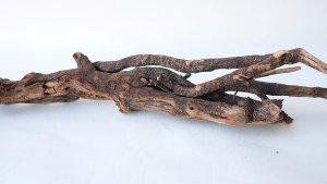 画像5: 流木根