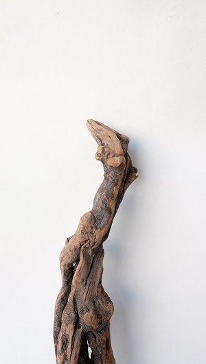画像4: 流木根