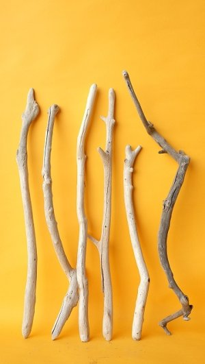 画像1: 小枝流木セット