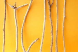画像3: 小枝流木セット