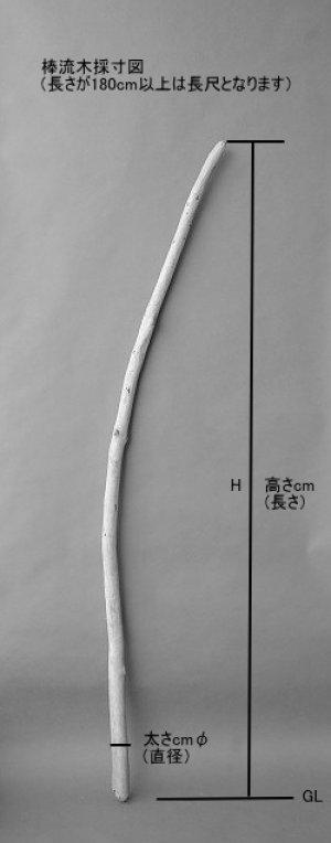 画像5: 棒流木・長尺