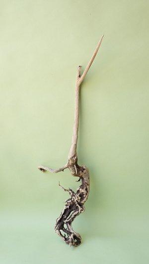 画像1: 流木根