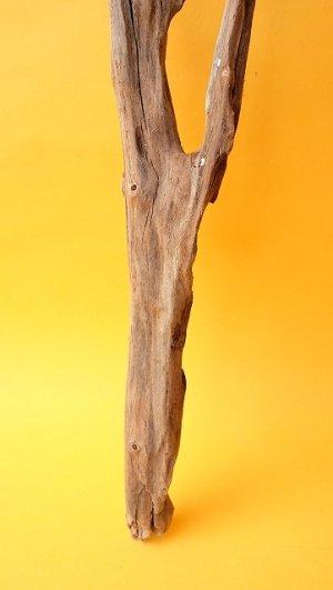 画像2: 小枝流木