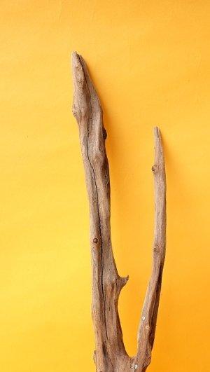 画像3: 小枝流木