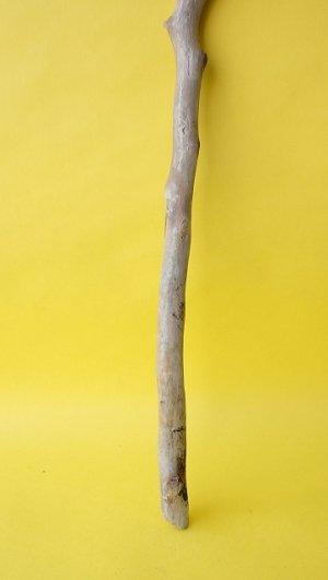 画像2: 枝流木