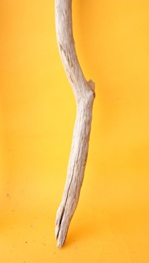 画像5: 枝流木