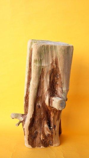 画像1: 幹流木