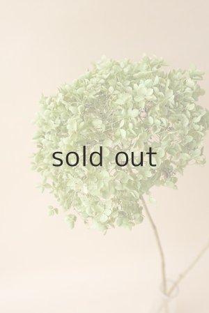 画像3: ●無くなり次第終了200円見切り売り!●Dry plants for decor デコール用乾燥紫陽花(アナベル・小)2018年度開花分アウトレット