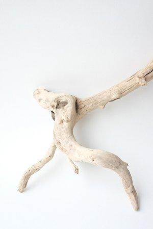画像2: 流木根セット
