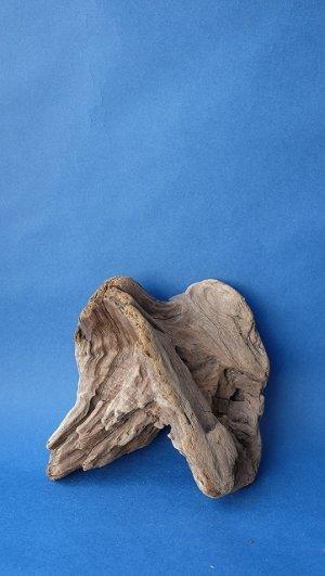 画像1: 変形流木