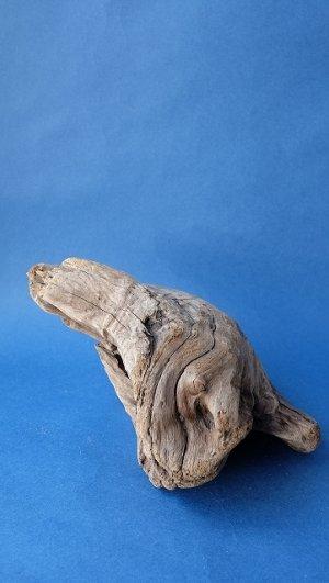 画像4: 変形流木