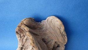 画像3: 変形流木