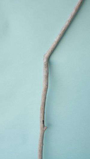 画像3: 枝流木