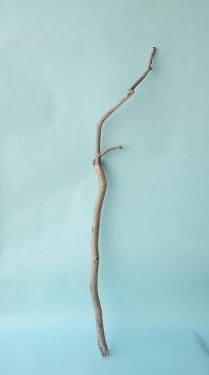 画像1: 枝流木