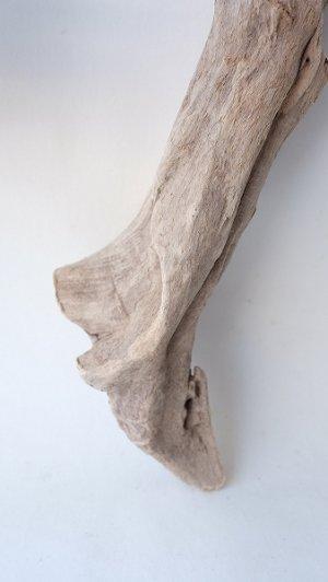 画像2: 変形流木