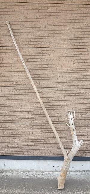 画像1: 幹流木・長尺