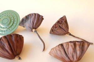 画像3: Dry plants for decor デコール用乾燥花托(蓮)セット*outlet*