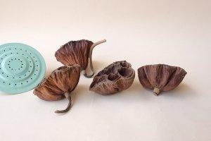 画像2: Dry plants for decor デコール用乾燥花托(蓮)セット