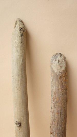 画像3: 棒流木セット(カット流木)