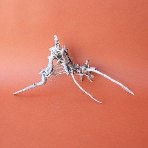 画像1: ミニ流木根