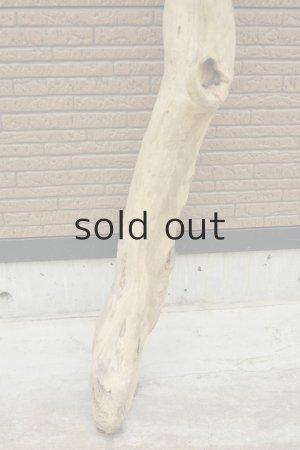 画像2: 幹流木