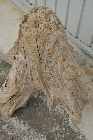 画像3: 大型 根